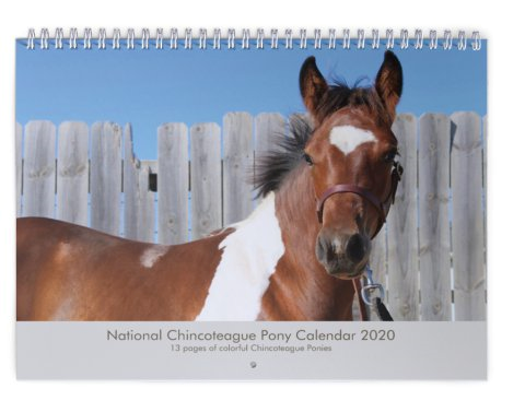 Welcome to The National Chincoteague Pony Association